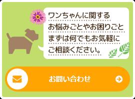 dogsalon-vivi